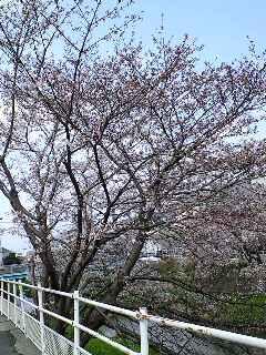 明日から愛媛県は雨…
