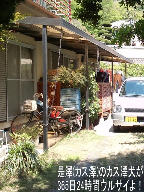 石川遼VS丸山茂樹