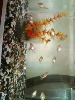 ギョギョギョ金魚ッ!