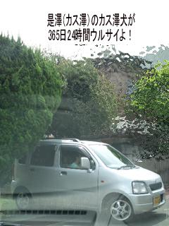 朝からイライラVS無責任是澤&是澤犬!
