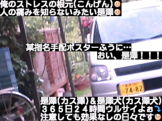 佐々木希の邪魔する無責任是澤&是澤犬!