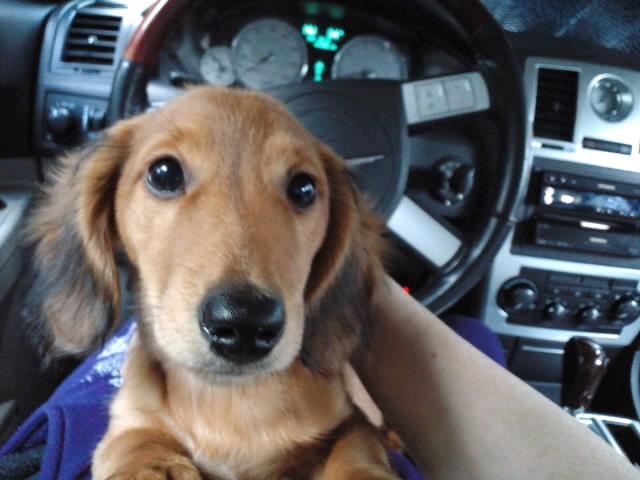 愛車と愛犬と俺と。