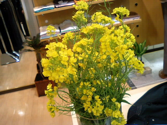 菜の花。。。